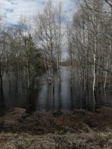 Tulvakuvia
